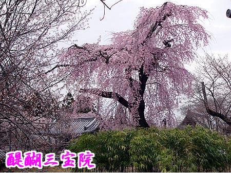 image/gion7638-2007-04-02T22:50:15-1.data