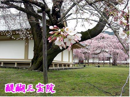 image/gion7638-2007-04-02T22:50:16-2.data